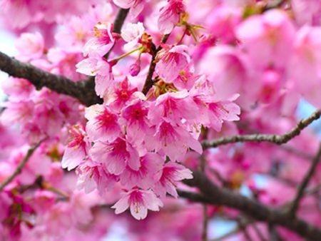 immagine fiori